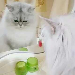 你是在面壁思过,还是趁机照镜子😂#宠物照镜子##家有喵星人##宠物#