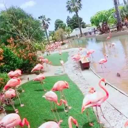 🌴圣地亚哥🌴动物园好干净,一点臭味都没有,绿化好,管理的好👍在这里生活一定很舒服,节奏缓慢,花园一般的生活环境,新鲜干净的空气,碧海蓝天!移民会考虑选择这里😍#圣地亚哥##旅行的意义##大海#