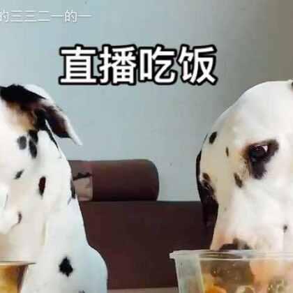 偶尔仔细观察他们吃饭也挺有意思~🍚早安~😛#宠物##吃秀#