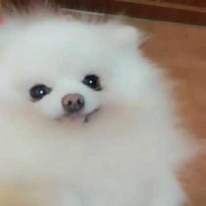 别看我,再看我就亲你哟#宠物##美拍表情文#