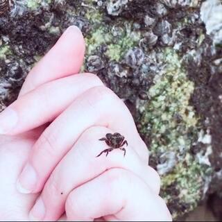 给你们看一个超级萌的家伙,在海边拍客片的时候看到的#随手美拍##旅行#