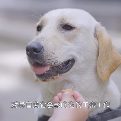 看哭!她花百万训练7条导盲犬,免费给盲人使用,自己却无儿无女还曾因狗狗意外车祸去世而患抑郁#二更视频##萌宠##汪星人#