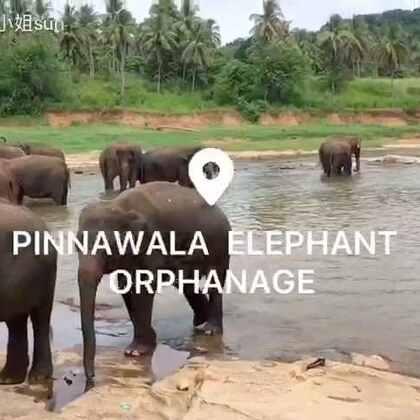 大象孤儿院的这些小象们真的是很可爱~🐘萌萌哒