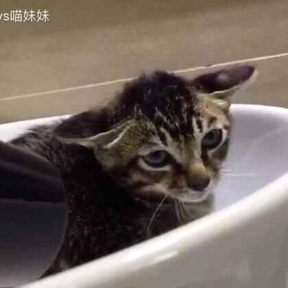流浪猫阿狸喜欢洗澡吹毛剪指甲😁从跟我回家那刻开始就表现得特别乖👍🏻无论喵妹怎么喷牠都不还口😋但会和仔仔对峙😂欺负黑哥😂眼力劲很好嘛👻😜#宠物##关爱流浪动物##小阿狸🐱#