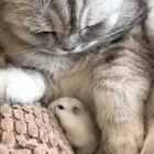 #宠物#新版猫🐱和老鼠🐭 老鼠怕猫是谣传系列😅😂@猫侠的日常