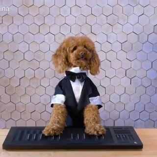 噔噔噔噔!ROLI重磅推出。。#Seaboard#狗!能弹古典又能打碟的全能超级狗弹Seaboard是什么情况?!赶紧戳视频探个究竟!#音乐##萌狗狗#
