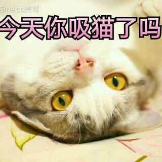 今天你吸猫了吗?😝#宠物##日常吸猫##吸猫大赛#包子的两只后腿胖得像两个大鸡腿,有木有?😂