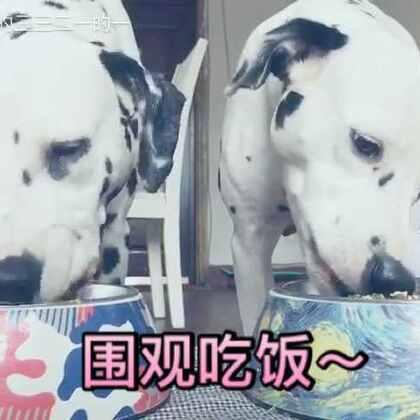 午餐:🥑➕🥚➕狗豆。 感觉他俩不爱这个味儿,点点没吃完,于是三一帮她吃光光了~#宠物##吃秀##吃货的日常#