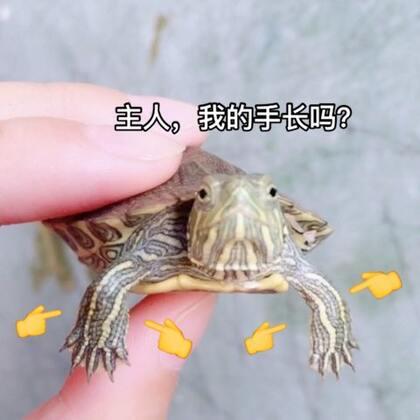 我的宠物是小乌龟🐢😂😂#宠物##乌龟#