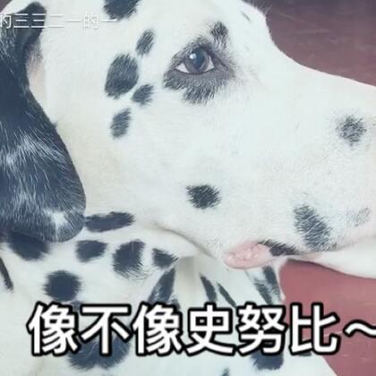 一脸懵逼的结尾,哈哈~逼死强迫症啊😏我好坏坏~#宠物##吃秀#