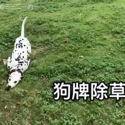 您的好友除草三已上线~#宠物##搞笑#