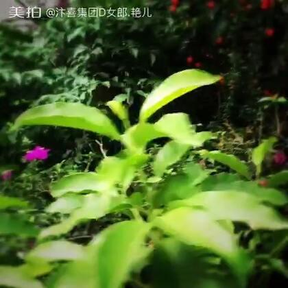 【汴喜集团D女郎.艳儿美拍】17-06-08 11:29