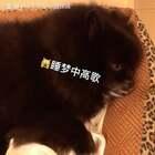 黑老大梦里高歌🎤一旁的阿妹看傻眼😱😂#宠物##黑仔BB##宠物独特叫声#