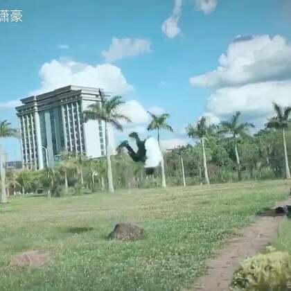 云南的天空和风景真的没毛病 毽子720终于敢在草地上做了 肯定会越来越好