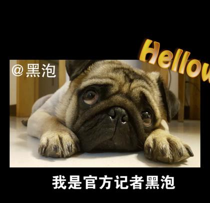 球球大作战BPL全明星赛即将于明日(6月10日)在上海虹桥天地盛大开幕,继之前发起全民票选王牌阵容之后,今日也相继曝光了全明星赛的四大玩法,选手解说携手球宝嗨翻全场,一起点亮BPL全明星之夜!到底是哪四大玩法,快来看一下吧!