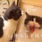 这是一部悬疑猫片😱喵妹化身猫侦探👮一举摧毁了混迹于江湖多年的蹭吃蹭喝猫团伙😎剧情时长4分钟^但故事很精彩^欢迎路过的小伙伴们点赞留言哦。#宠物##宠物内心小剧场##喵妹嘻哈剧#