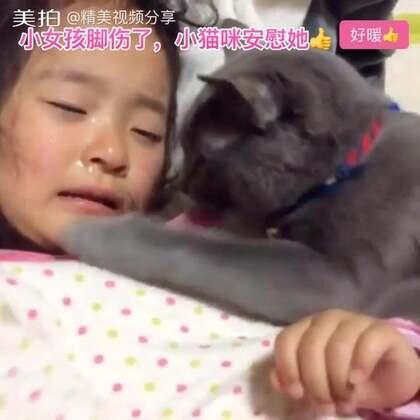 小女孩脚伤了,疼的流泪,可爱的小猫咪跑过去安慰她👍太暖了👍转发正能量👍#正能量##精美电影##宠物#