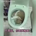 方翠花,你跟我粗来!😂😂😂太搞笑啦……#搞笑##宠物#