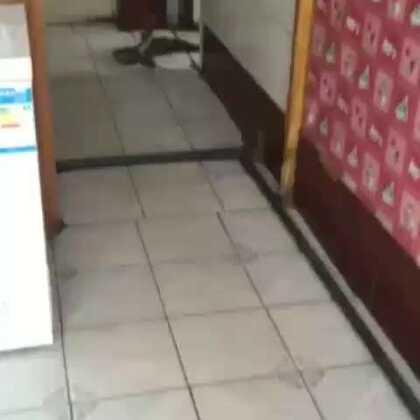 这猫真逗😂😂😂😂