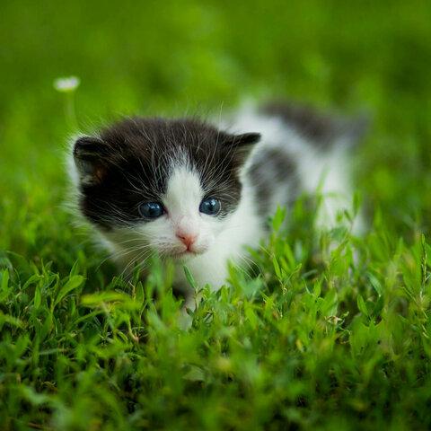 【小颜~polce美拍表情文】可爱的小猫咪#猫咪