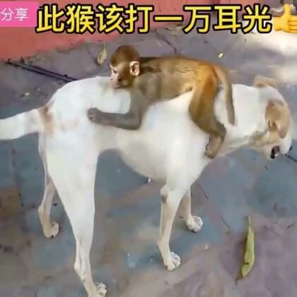 此猴该打一万耳光👍#宠物##搞笑##精美电影#@美拍小助手