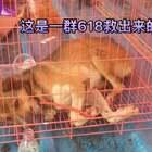 618狗狗救助现场💡你想象不到它们遭受了什么,我没有华丽的语言,只求心存善念的人们🙏,不再吃狗肉,不要去伤害它们,尽可能的去帮助🙏🐱🐶 #不爱请别伤害##反对狗肉节#