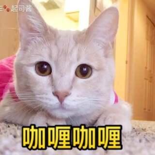 司麻演唱,Cheese伴舞,为大家表演一曲咖喱咖喱~~☺☺唱的不好大家见谅哈~~#宠物##咖喱咖喱##音乐#