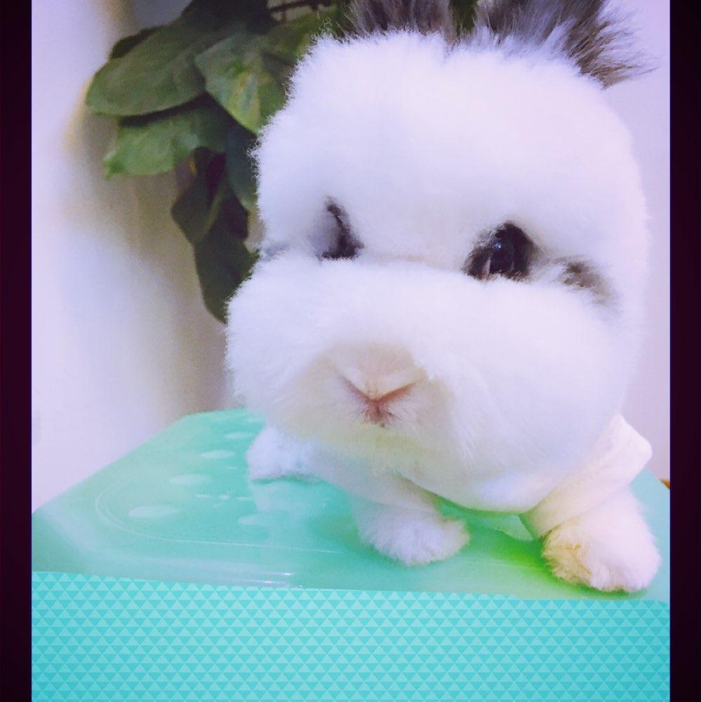 06-25 01:22     #宠物兔子# #小兔子成长记# 萌萌