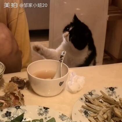 喵喵~快给我尝尝什么味道~给一点点,就小手上一点点