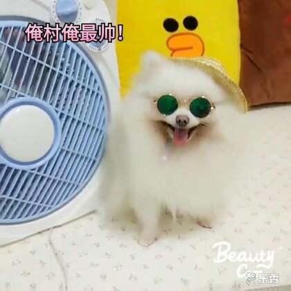 人不如狗系列…#宠物##搞笑#