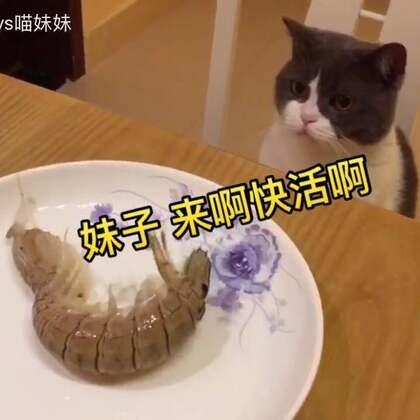 🐱:麻,你看,皮皮虾跳舞色 诱我😂#宠物##喵老板#