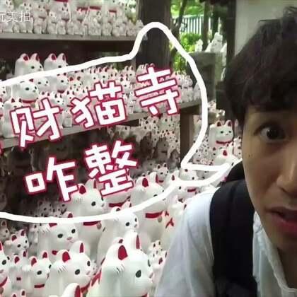 【日本咋整50】一万只招财猫!?东京小众旅游景点豪德寺攻略。日本哥带你去别人不知道的招财猫发祥地。