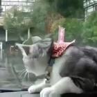 可怜的猫咪被玩坏了😂😂😂