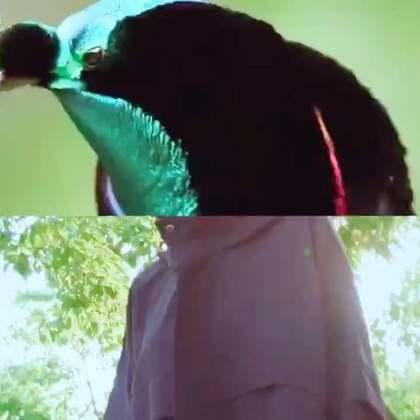 #AUDC#服装大片《Freedom 》#穿秀#