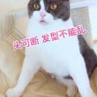 #我家的宠物会说话#🐱:😤打人不打脸 摸我不摸头!宝宝森7啦!!#宠物##宠物独特叫声#