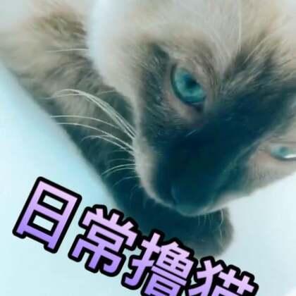 日常撸猫,阿福今天辛苦了