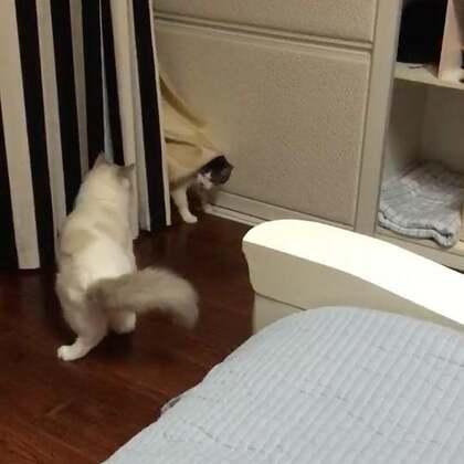 #宠物#发一个日常,躲猫猫!