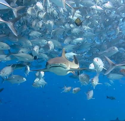 震撼!美女潜水达人咚咚,用镜头记录了鱼群风暴,诗巴丹海底美到窒息!#hi走啦##带着美拍去旅行##自由潜水#