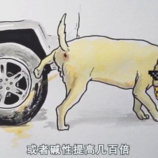 #真相大白话##汽车##搞笑#狗尿会让车轮爆胎?