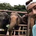 """""""大象在这里每天好欢乐,一想到舞台上的大象,拔凉拔凉的!你们要是去泰国了一定要拒绝任何商业行为,~OK?明天我会去种植植物,你们来起名(速速给🌳高逼格的名字来,选中有奖品!,还有留下你美腻的名字也有惊喜)"""