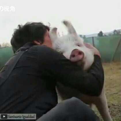 这就是为什么我们喜欢动物,看着真的好暖心!❤