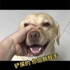 """#小布的日常生活# """"今天看到这个视频笑死了 来 小布 你给大家翻译下"""" #宠物#"""