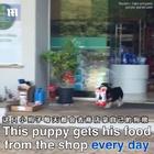 #宠物#巴西一只叫Pituco的小狗子,每天都会自己出门去商店拿狗粮,然后叼着屁颠屁颠地回家。狗子很满足很开心,然而它不造的是,它家铲屎官每次都要默默地去把它欠下的账给结了😂