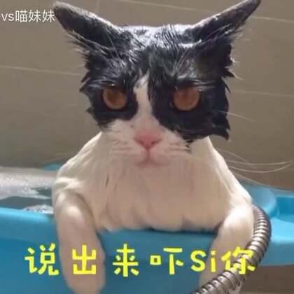 为了不枉喵妹这款正宗的熊猫外套^每天都可以干净如新🐼于是阿妹在洗澡🛀的问题上^又与铲屎婆展开了一场啼笑皆非的人喵大战💪最终喵妹湿身成功。😂😂#宠物##给宠物配音##喵妹嘻哈剧#