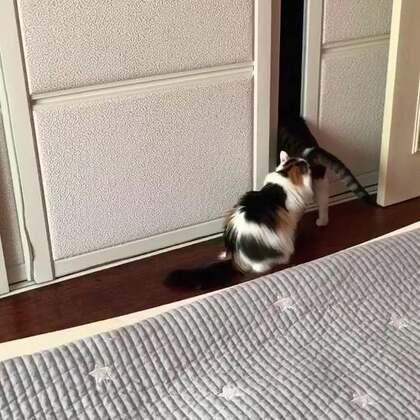 #宠物#西蒙say:机智如我😜。(PS:会开双层移门,去他想要的柜子里睡觉。旁边那位,怎么都学不会😂😂😂)