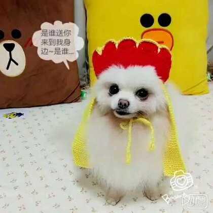 新版唐僧来啦!她的女主角居然是…#宠物##搞笑#