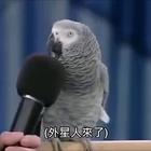 一只成精的鹦鹉,口技了得!👍#宠物##搞笑#