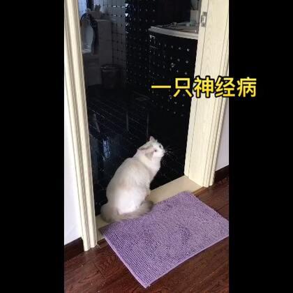 #宠物#养猫就等于养了一只神经病😁😁😁,时不时的给你来点小刺激😂😂😂