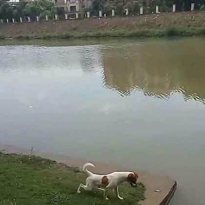 喵喵今天和我们一起去钓鱼#日常#