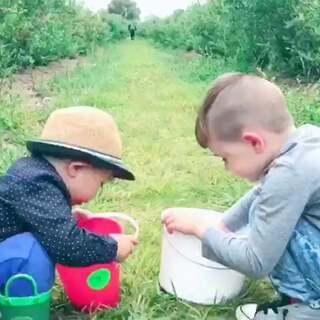 今天去体验农场主的生活 摘蓝莓#Ethan游记##热门##Ethan和朋友##Ethan34个月#第一次看到这么一大片蓝莓园 蓝莓长得又大又多 特别的甜美多汁 农场没有门票 摘完了去门口称重 摘了几斤就付几斤的钱 孩子们一边玩 一边摘 一边往嘴里塞😂😹更多美照在微博哦😉✌